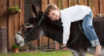 Lebensglueck-Erlebnisse-Eselwandern